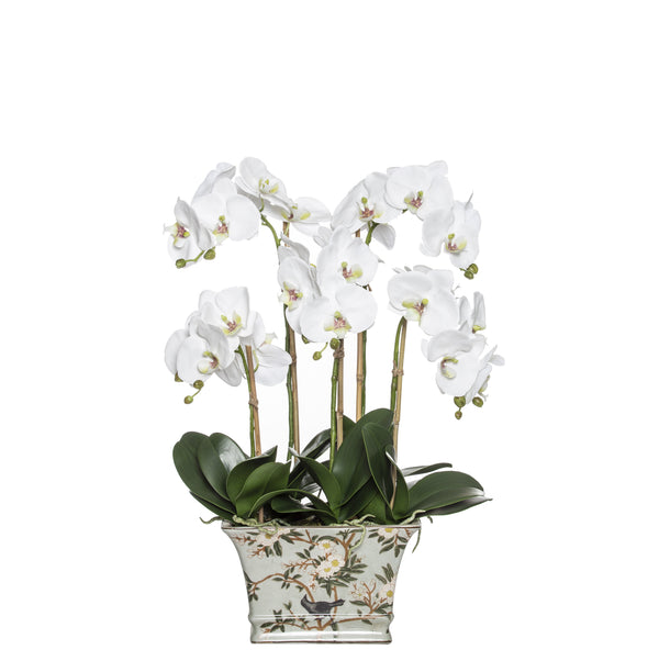 Shop Deluxe Phalaenopsis - Delilah at Rose St Trading Co