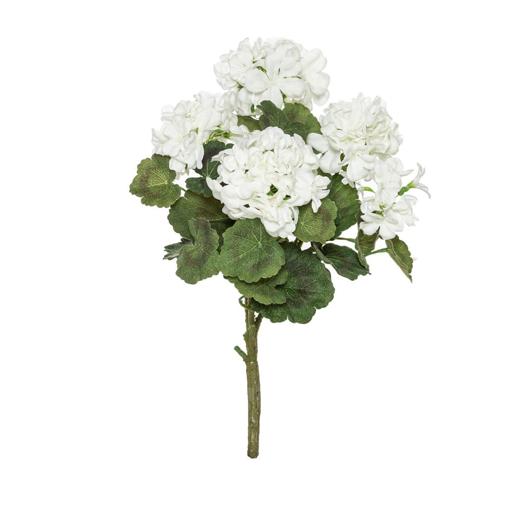 Shop Geranium Bush | Small at Rose St Trading Co