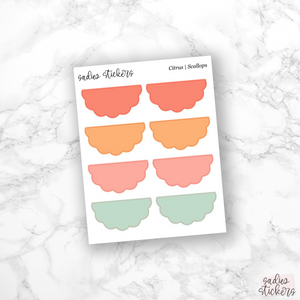 Citrus Multicolor | Scallops