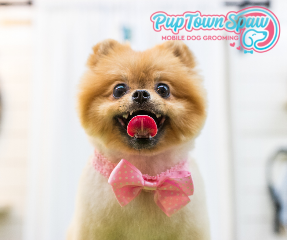 Become A Pet Groomer-Pup Town Spaw LLC
