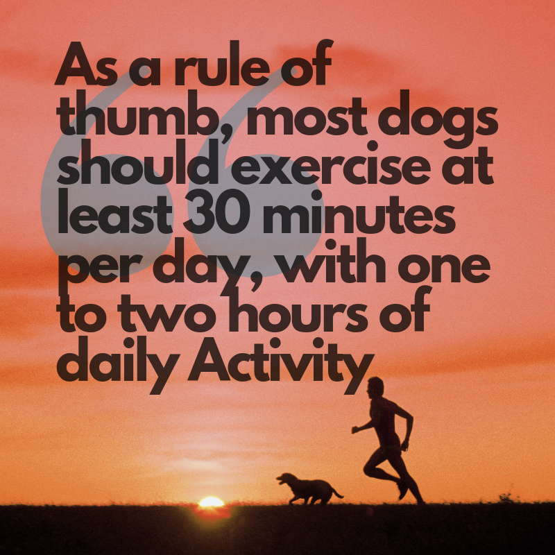 How much Exercise does your dog need?-Pup Town Spaw LLC
