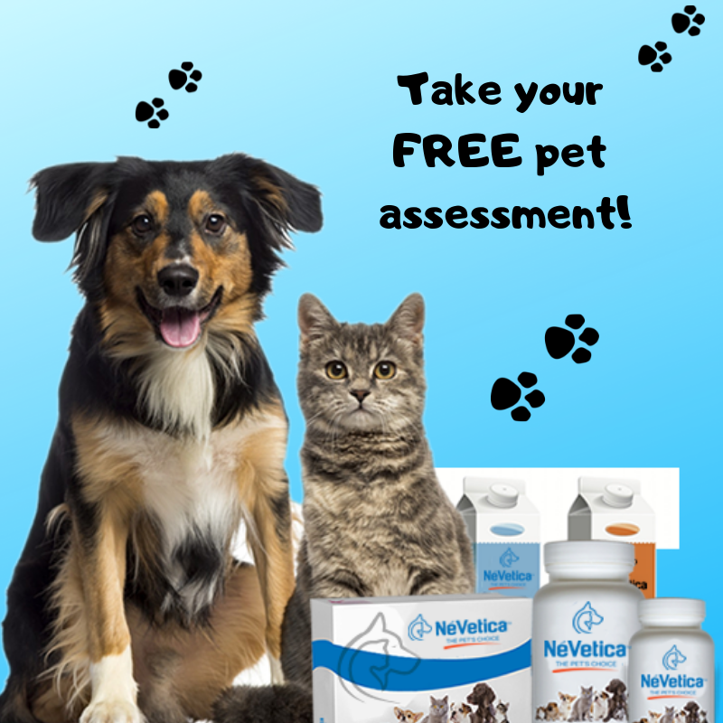 The FREE Pet Assessment?-Pup Town Spaw LLC