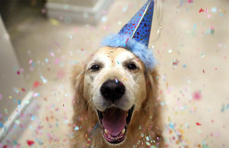 Pet Parties Are Sweeping The Nation-Pup Town Spaw LLC