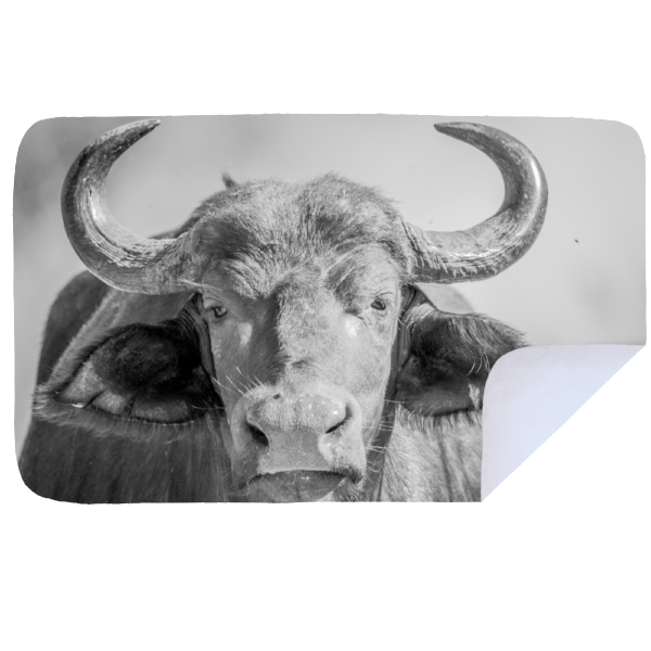 Microfibre XL Printed Towel - Buffalo