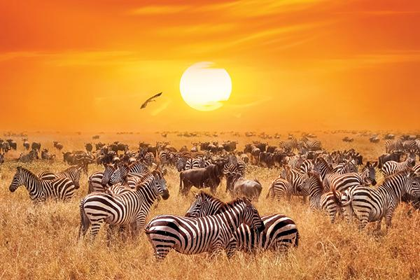 Microfibre XL Printed Towel - Zebra sunset