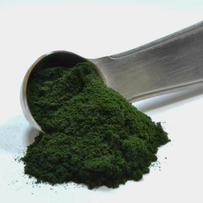 Enjoy organic chlorella powder, enjoy five superb health benefits!