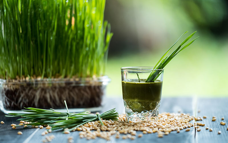 Wheatgrass – the supreme super green for your immune system