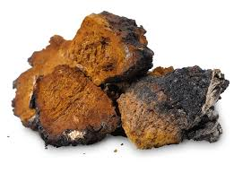 The chaga mushroom and 3 convincing health benefits - by The Superfood Blog