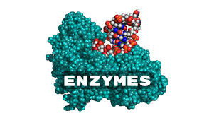 The remarkable health benefits of enzymes - by The Superfood Blog