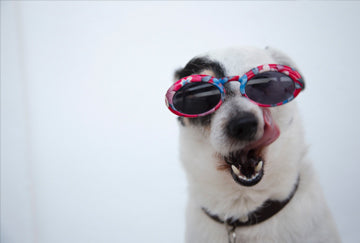 It's A Dog's Life - Keep your pets cool in summer