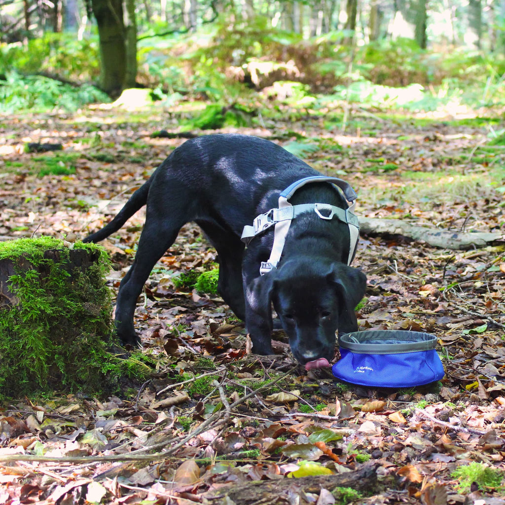 Collapsible Dog Food Bowl - Small - Its A Dogs Life | Clothing & Gifts