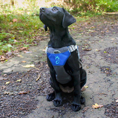 Blue Dog Harness - Small - Its A Dogs Life | Clothing & Gifts