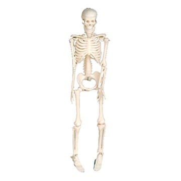"Mini Plastic Skeleton - 2.25"" - 6 Pieces"