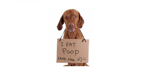 Dogs Eating Poop - Why Do They Do It?