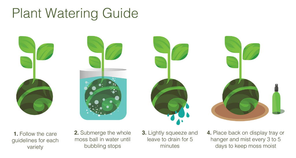 Kokedama Plant Care Guidelines Tranquil Plants