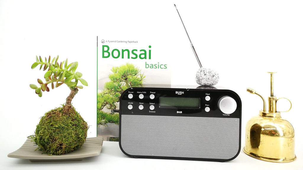 Kokedama Bonsai Care