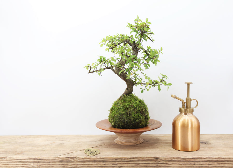 Tranquil Plants Kokedama Corporate Gifts