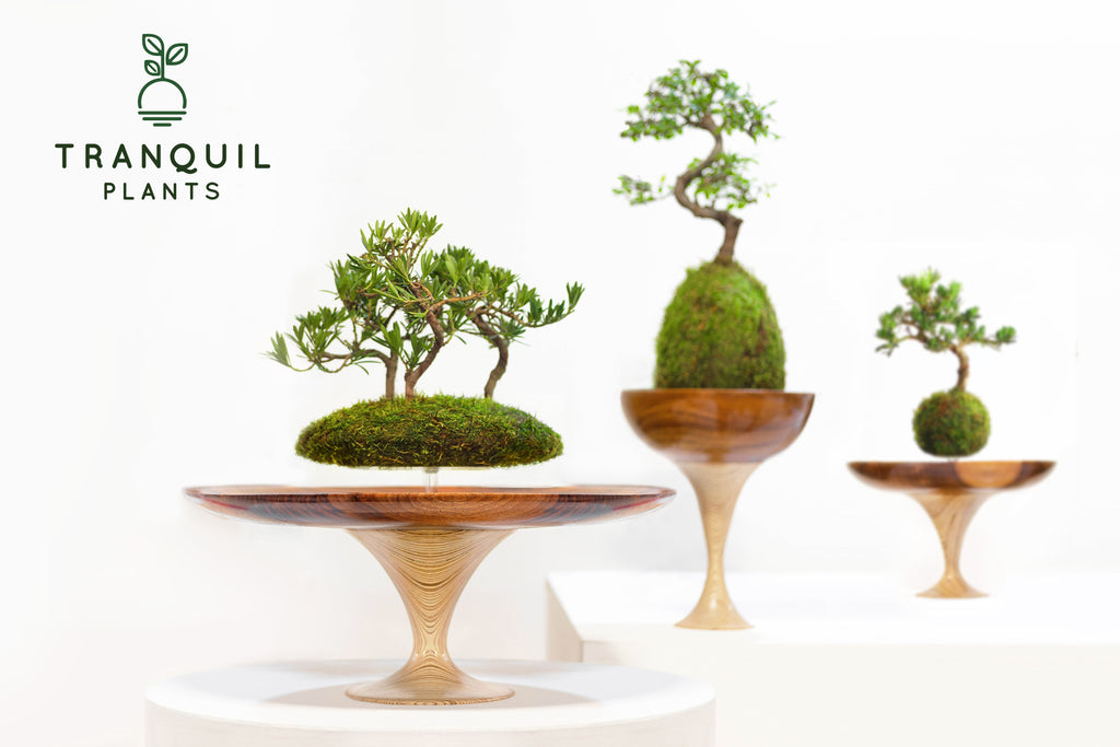 Tranquil Plants Memories of Green Event Horizon Collection