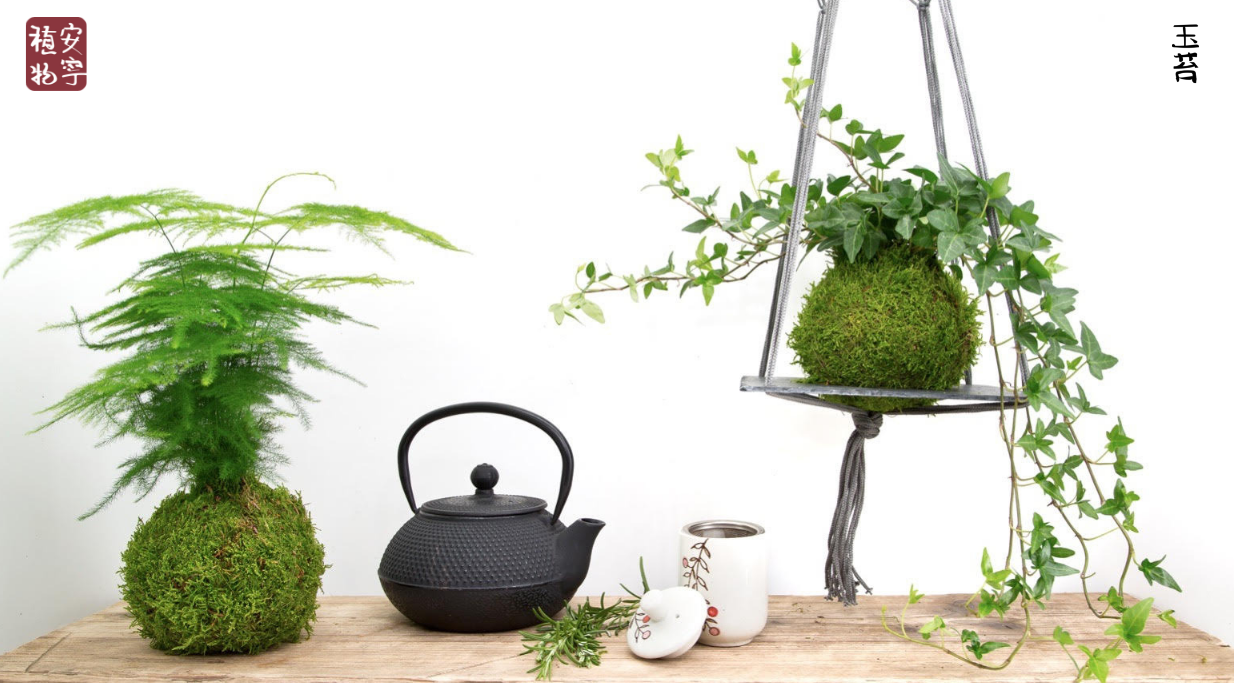 Kokedamas and Bonsai Trees from the UK's number one supplier