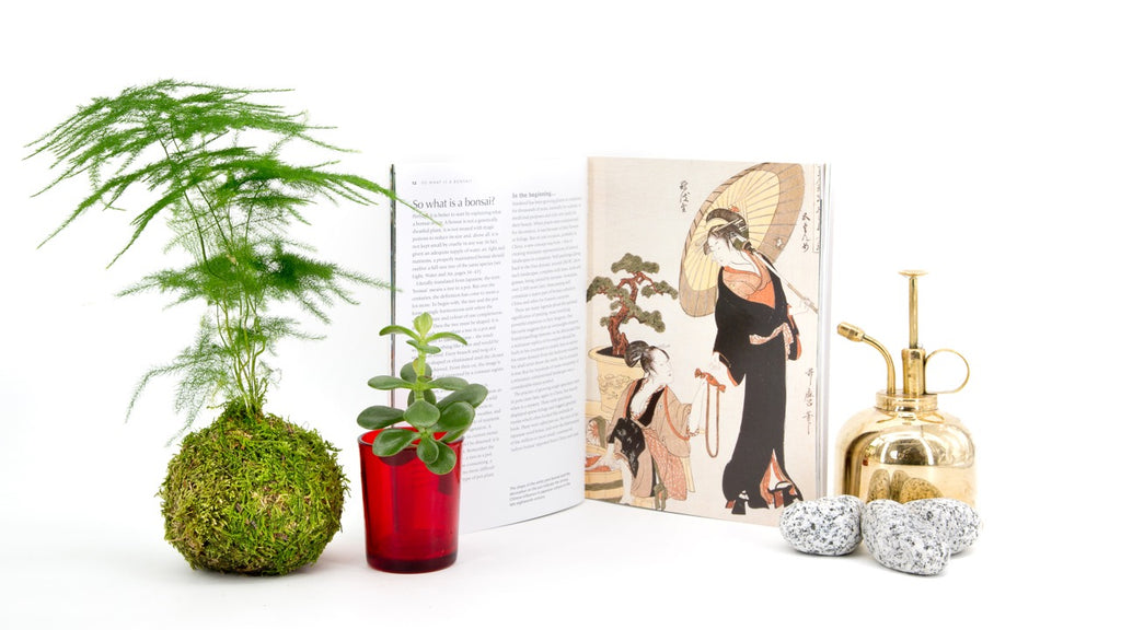 Tranquil Plants Book Kokedama Bonsai Fresh Air Plant Ethos History
