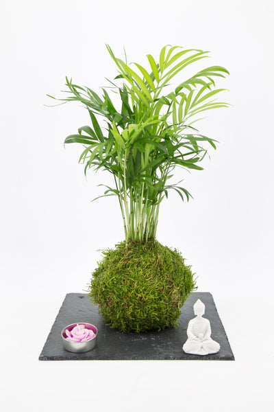 Palm Zen garden on slate tray