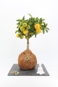 Mini Citrus Coco Fibre Zen garden on slate tray