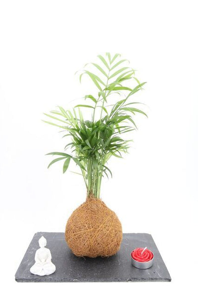 Palm Coco Fibre Zen garden on slate tray