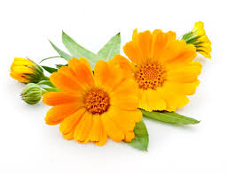 Calendula, Just What Your Skin Has Been Waiting For