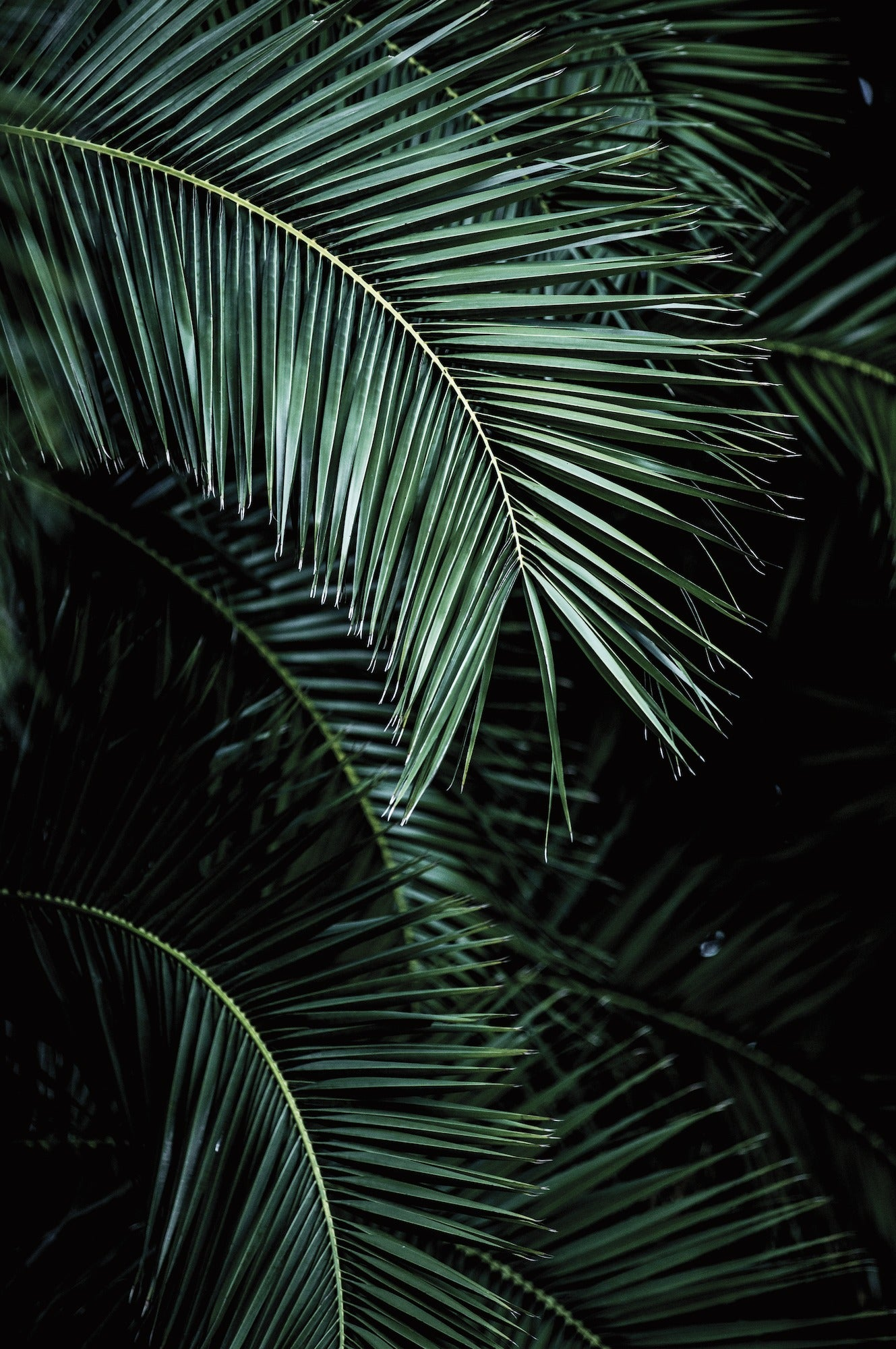 Palm Leaf Wallpaper Mural in Black & Green