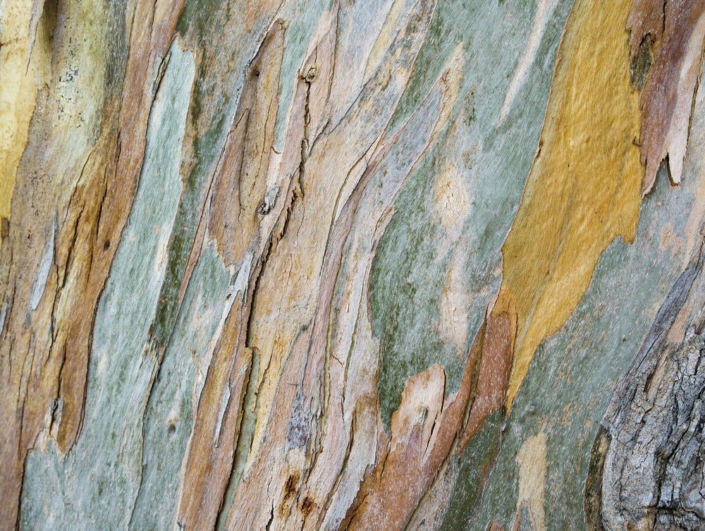 Bark / Concrete Wall Effect Wallpaper Mural Brown, Yellow, Grey - Your 4 Walls