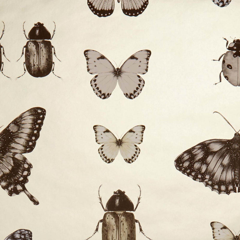Papilio Traditional Insects & Butterflies  | Designer Motif Wallpaper in Charcoal & Gold - Your 4 Walls