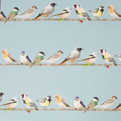 Chatting Birds Motif Wallpaper in Duck Egg Blue - Your 4 Walls