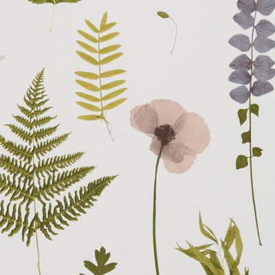 Herbarium Pressed Flower Effect Floral Wallpaper | Blush Pink, Green & Purple - Your 4 Walls