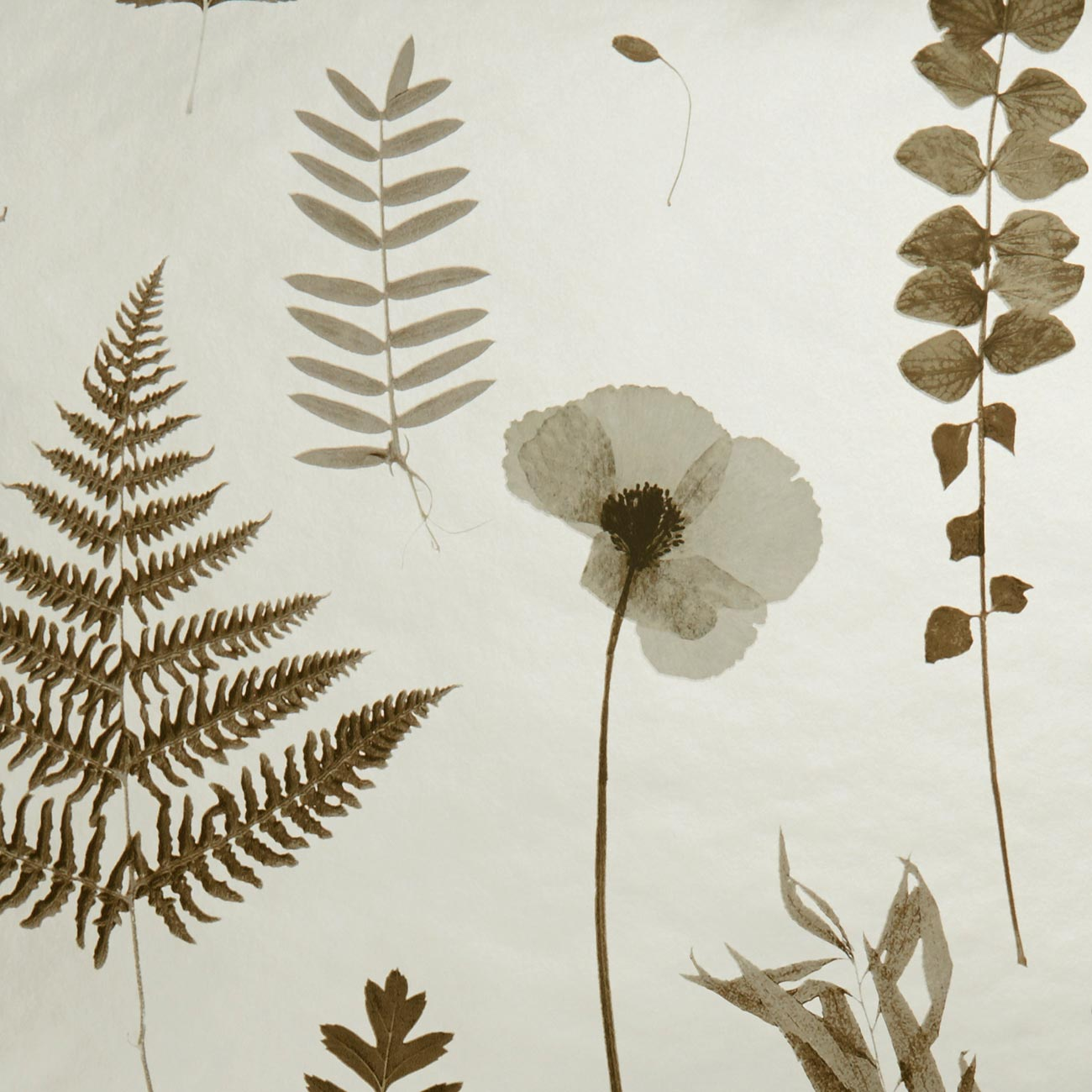 Herbarium Pressed Flower Effect Floral Wallpaper | Charcoal and Gold