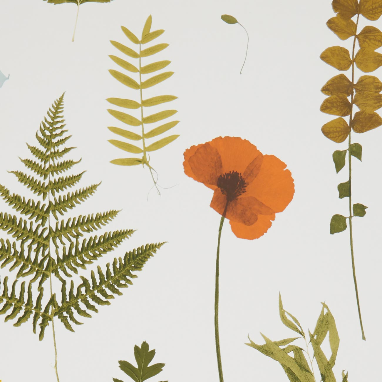 Herbarium Pressed Flower Effect Floral Wallpaper | Multi-Coloured, Orange and Green
