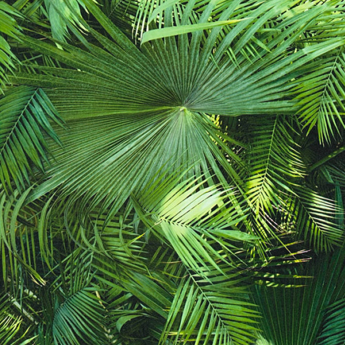 Large Print Palm Leaf Effect Wallpaper | Green