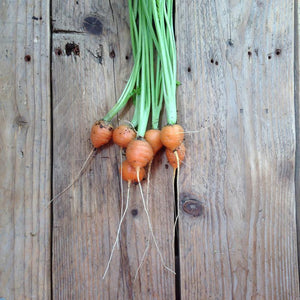 Piccolo Seeds - Carrot 'Paris Market'