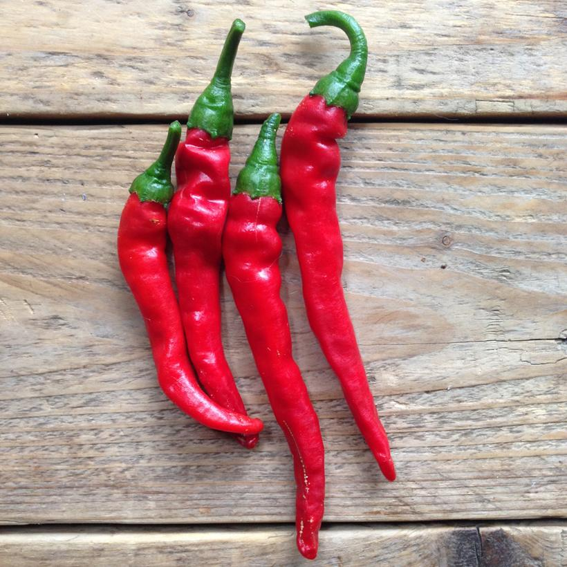 Piccolo Seeds - Hot Pepper 'Cayenne Long Slim'