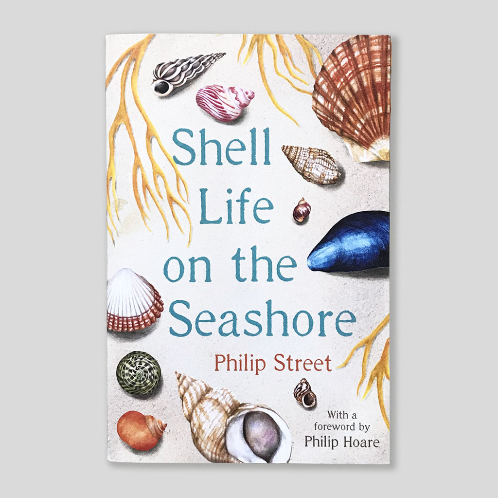 Shell Life On The Seashore | Philip Street | Colours May Vary