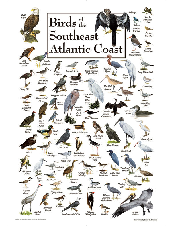 "Puzzle ""Birds of the Southeast"""
