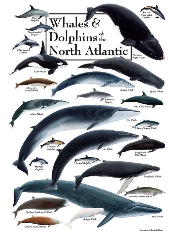 "Puzzle ""Whales & Dolphins of the North Atlantic"""