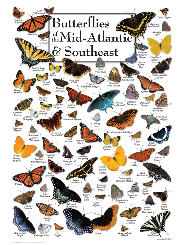 "Puzzle ""Butterflies of Mid Atlantic & Southeast"""