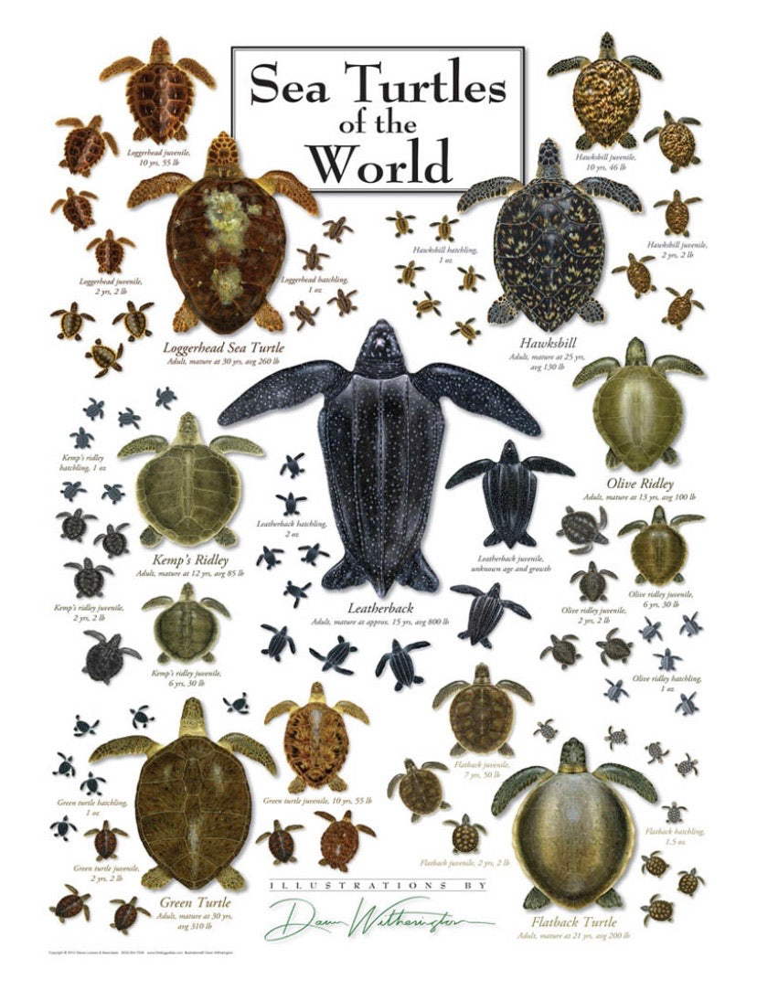"Puzzle ""Sea Turtles of the World"""