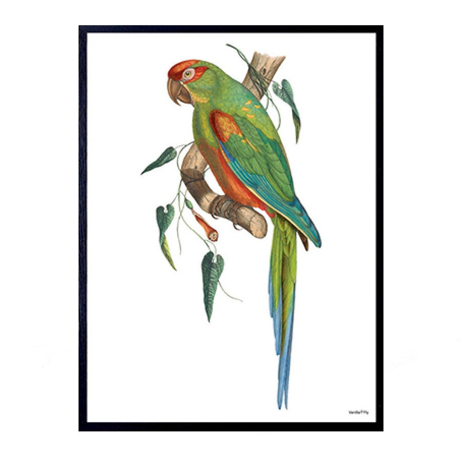 Vanilla Fly: Green Parrot (PSC93) 30x40cm  Poster