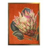 Vanilla Fly: Protea (PSC173) 20X25 Poster