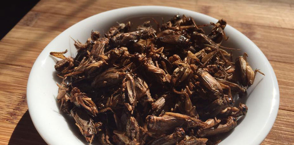 VitaBug Snack Crickets- Barbeque