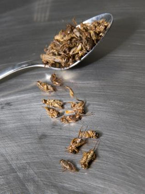 Plain Roasted Crickets 80g