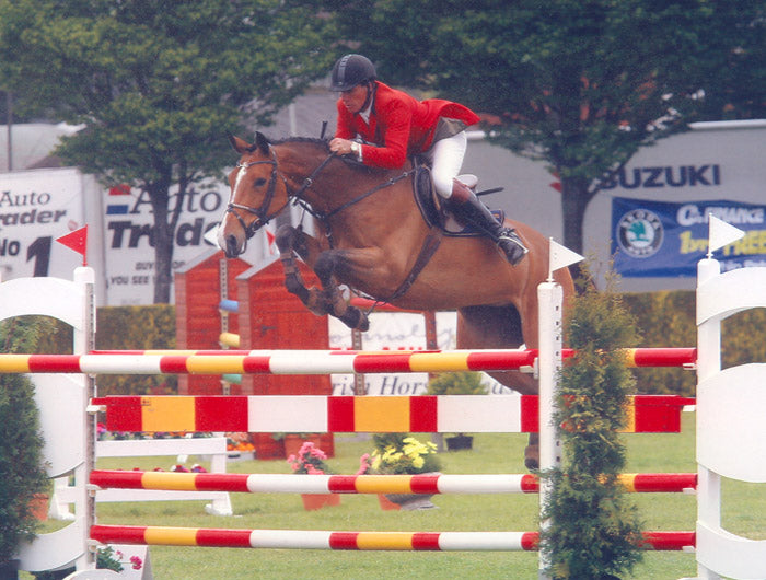 Euro Sport Horse - Horses For Sale