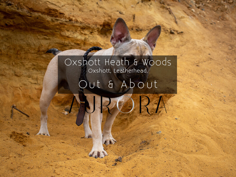 best dog walks in leatherhead