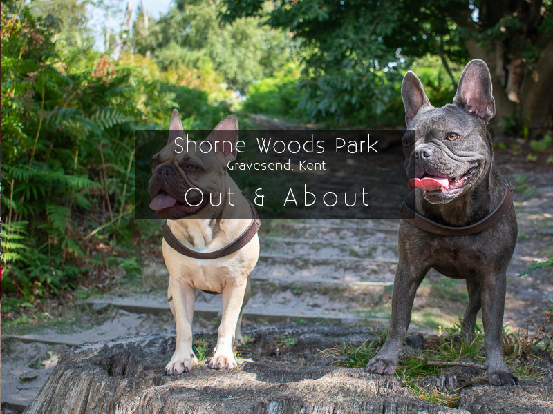Shorne Woods Country Park, Gravesend